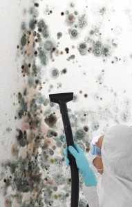 hiring-a-mold-removal-proffesional
