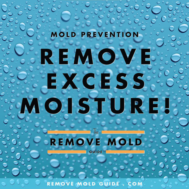 Remove Mold Guide