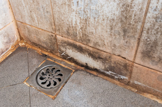 Remove Mold From The Shower